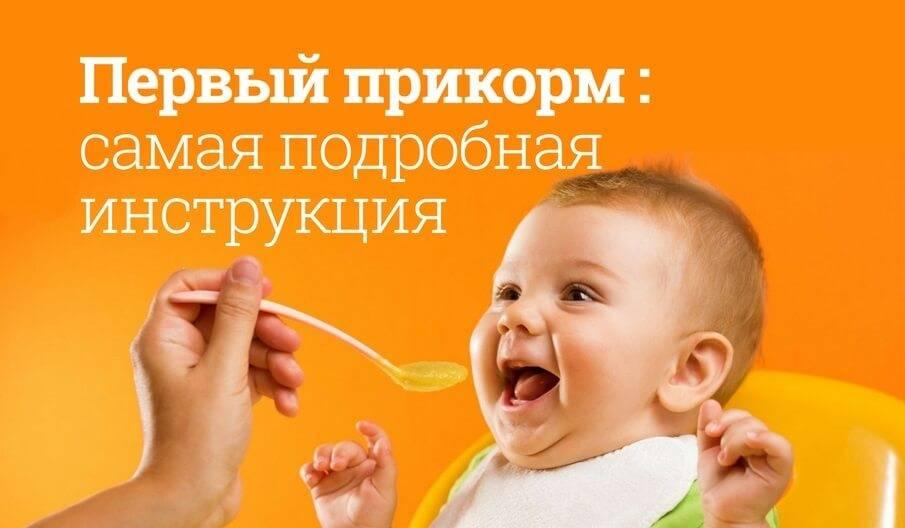 Базовые принципы введения прикорма